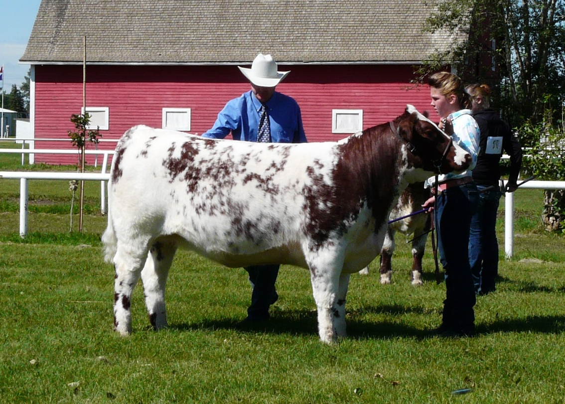 national-junior-shorthorn-show-2010-076.jpg